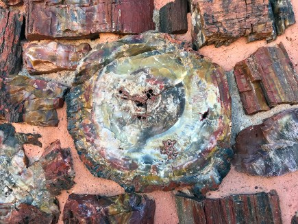 Rainbow Petrified Wood at Agate House