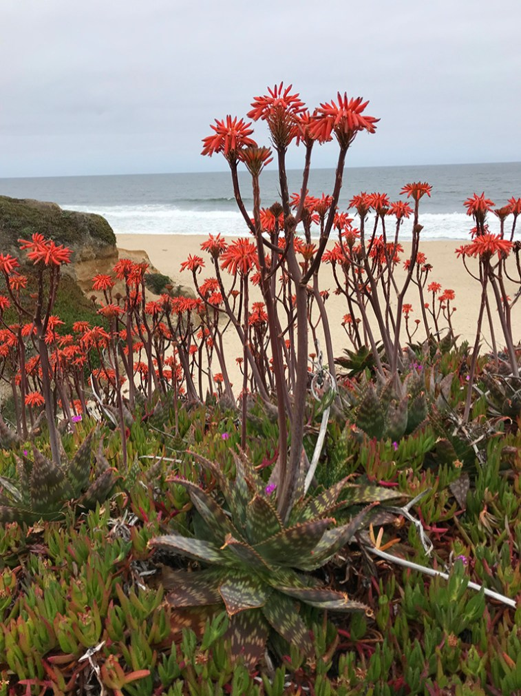 Beatiful Beach Flowers
