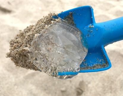 Moon Jellies at Half Moon Bay State Beach