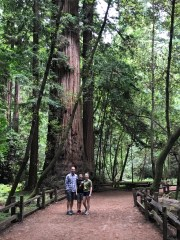 Family walk through costal redwoods grove in the Santa Cruz Mountains