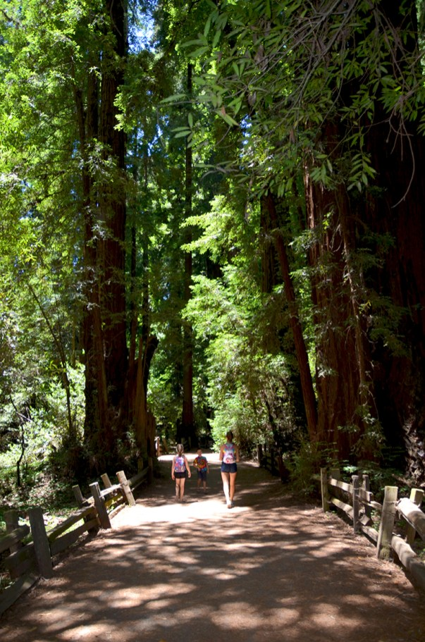 Walking the Redwoods Loop Trail at Henry Cowell Redwoods State Park in 2013