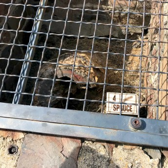 Petrified Wood Hidden In a Locked Cage