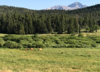 Mule Deer At Sheep Lakes