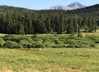 Mule Deer At Sheep Lakes