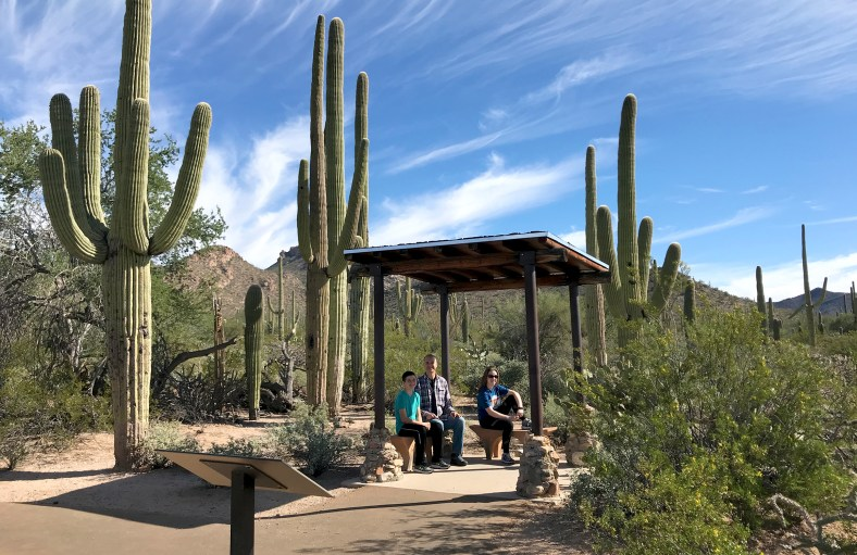Desert Discovery Trail Shade Cover Saguaro West