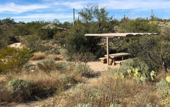 Javelina Picnic Area at Saguaro East