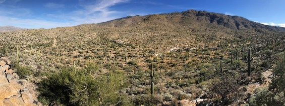 Rincon Mountain Overlook at Saguaro West