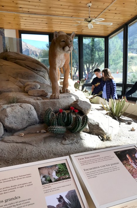 Chisos Basin Visitor Center Nature Exhibit