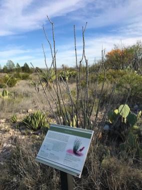 Ocotillo Living Desert Gardens Trail Signage