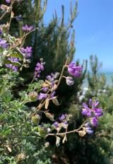 Coastal Wildflowers
