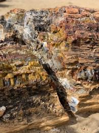 Petrified Wood In Utah