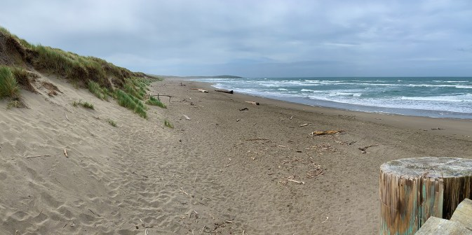 Bodega Dunes Campground Beach