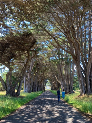 Brian and Carter Bourn at the Point Reyes Cypress Tree Tunnel