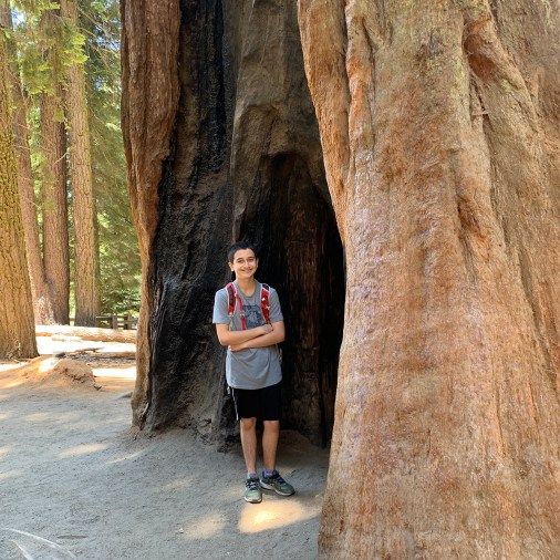 Carter Bourn Among Giant Sequoias