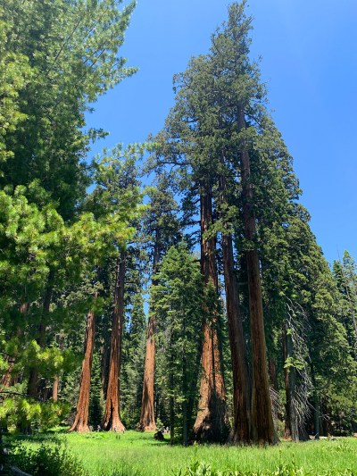 Giant Sequoias Cluster