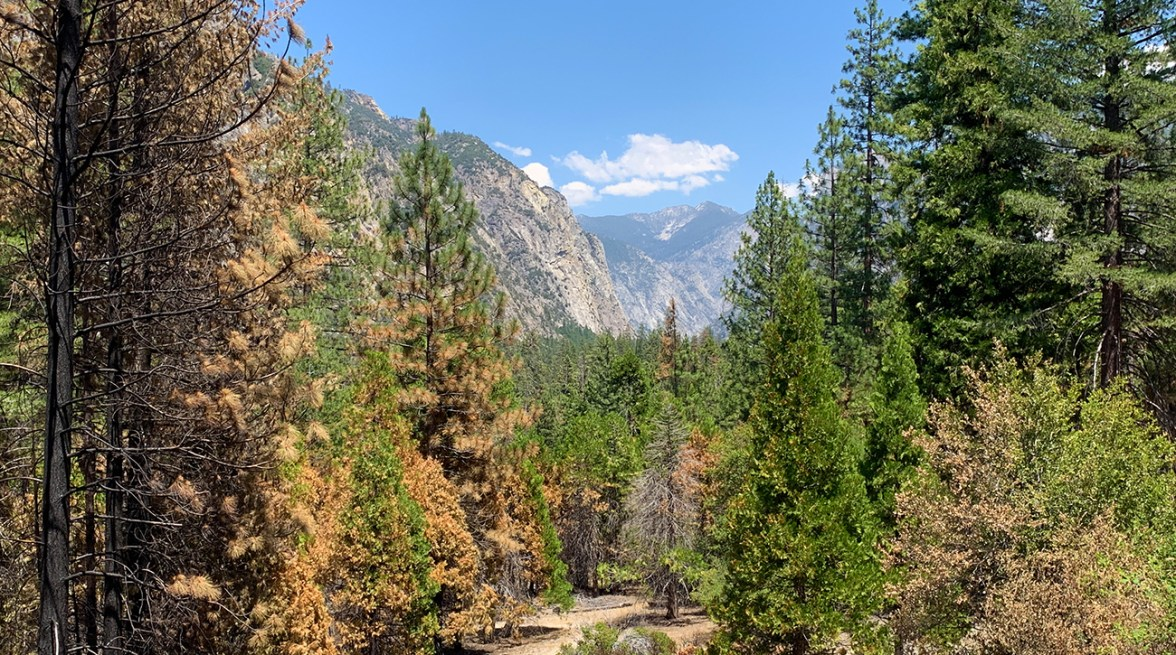 Canyon Overlook at Kings Canyon National Park