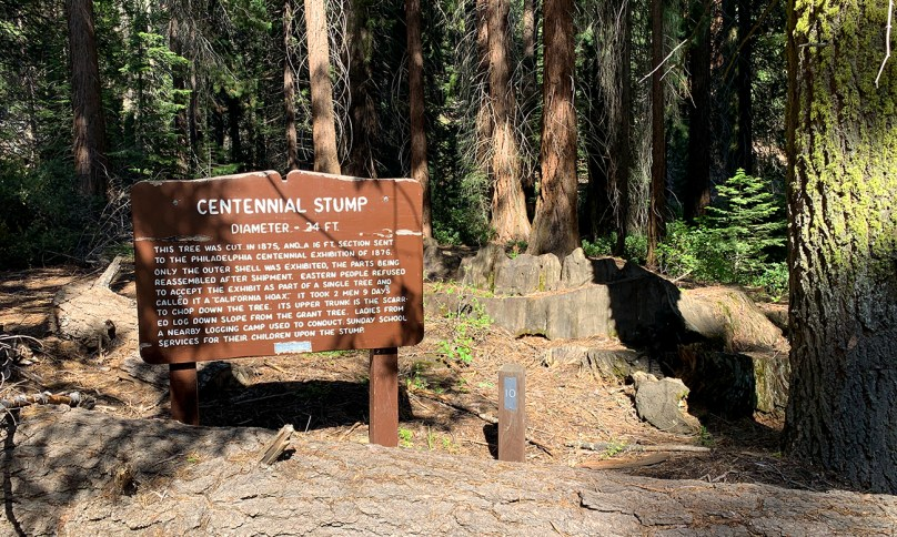 Centennial Stump at Kings Canyon national Park