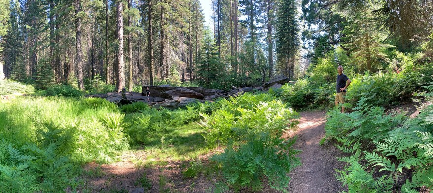 Lush Forest Along Big Stump Trail