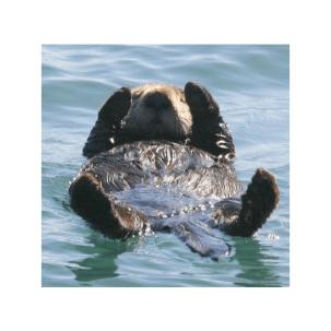 Otter on back