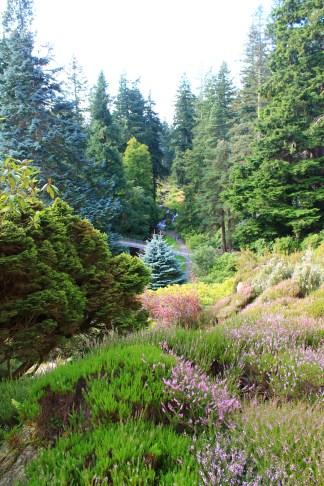 Cragside Rockery