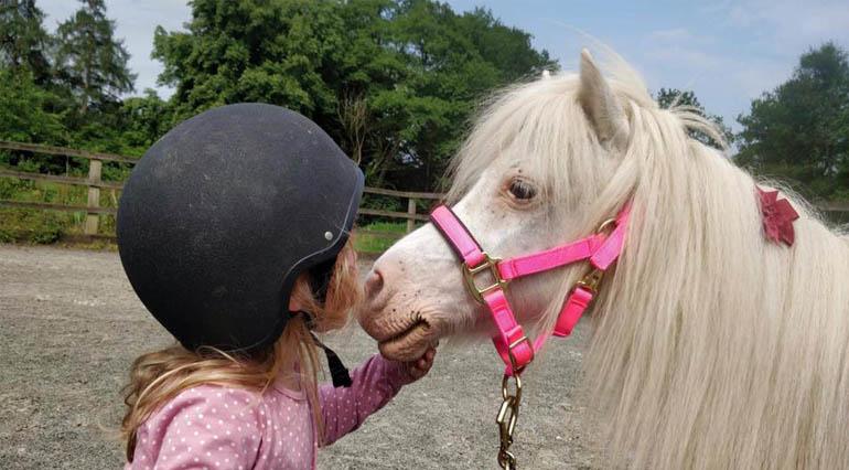 pony big new