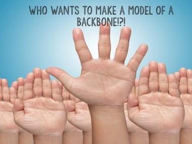 model of a backbone