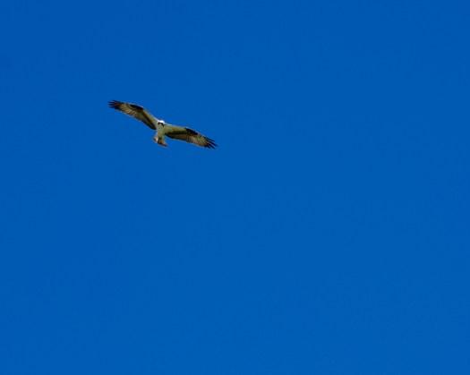 Fly High!