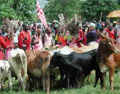 Image result for TRIBUTE: 911 Masai donation of cows to America