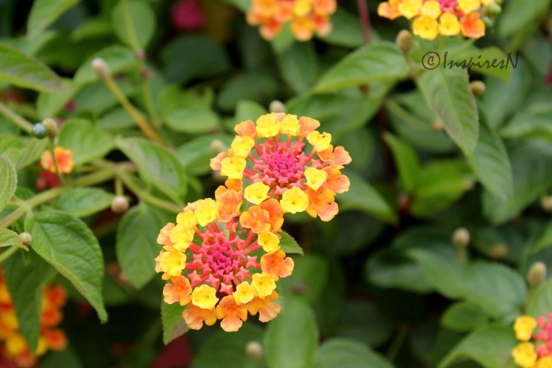 prettyflowers