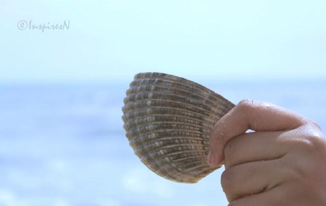 seashell at Atlantic beach