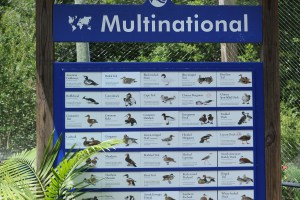 boards with details of species of birds