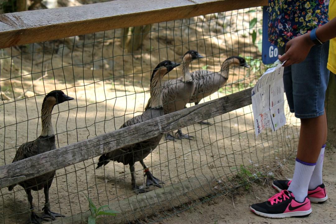 Sylvan heights bird sanctuary