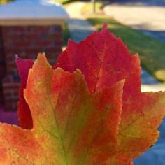 mobile capture of fallen leaves