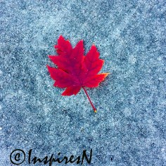 Red leaf against the gray pavement