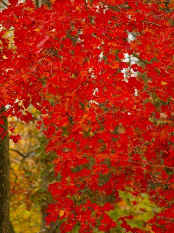 Fall Landscape photos