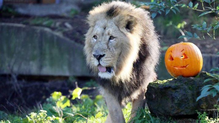 tempat wisata di inggris ZSL London Zoo