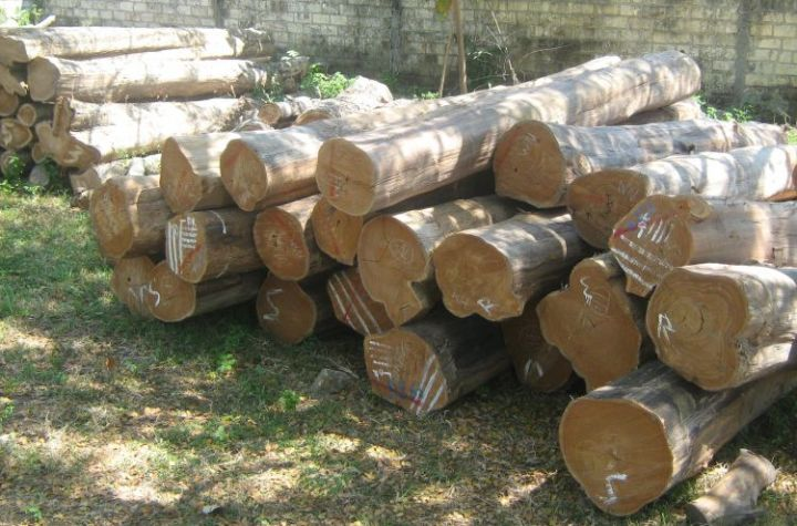 daerah penghasih kayu jati jawa barat