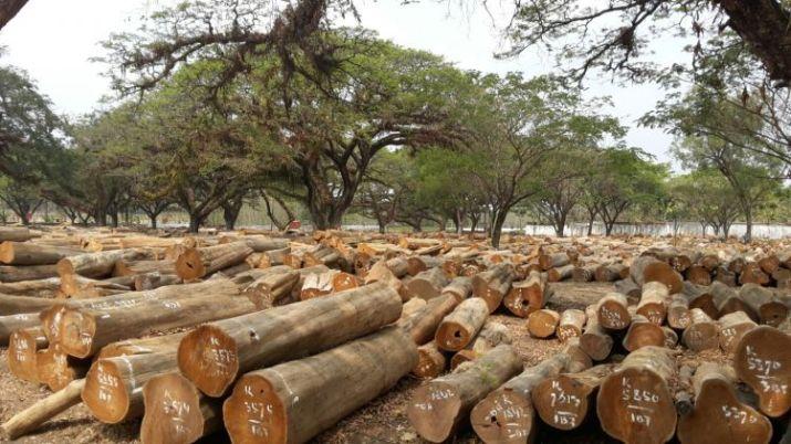 jenis jenis kayu di Indonesia jati