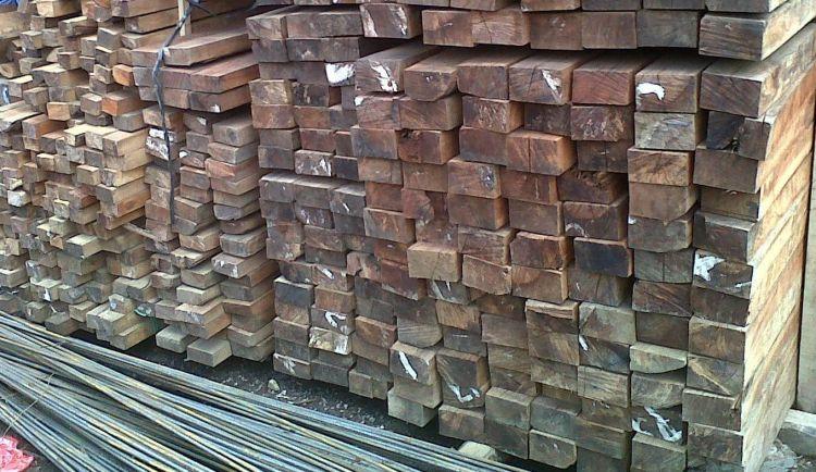 jenis jenis kayu di Indonesia rasamala