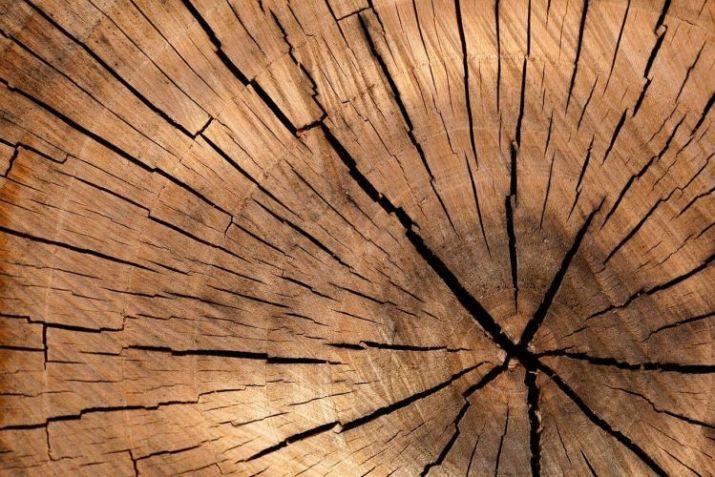 gambar serat kayu jati