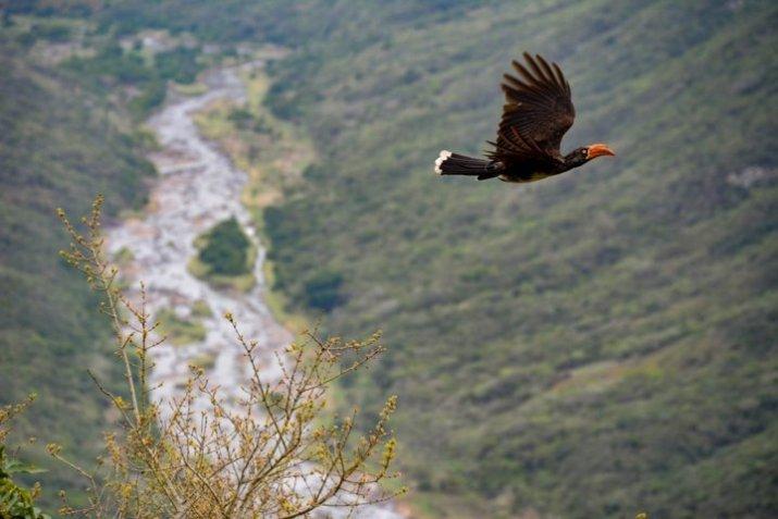 gambar burung terbang