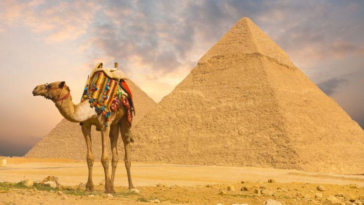 gambar onta dan piramida