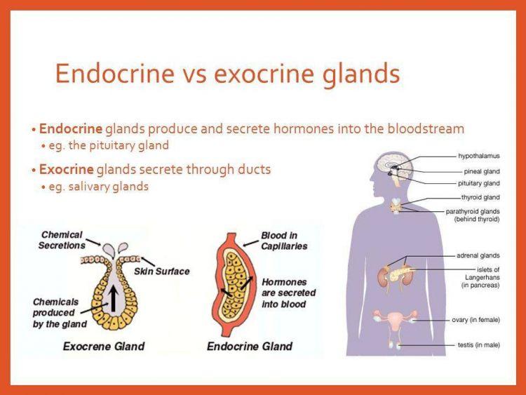 perbedaan hormon