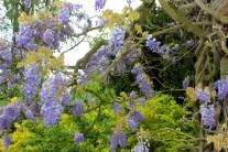 kew_gardens_may2012 (3)