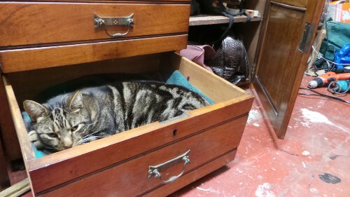 The studio is a cosy home for a cat