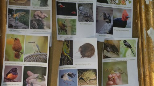 Inspiration for the show.  Endangered birds in the studio