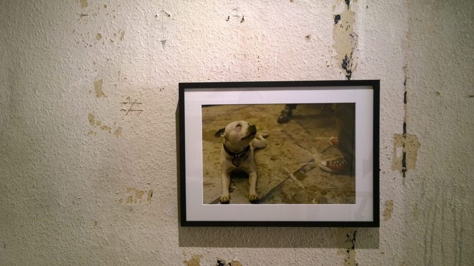 The gallery also has a number of photographs on show