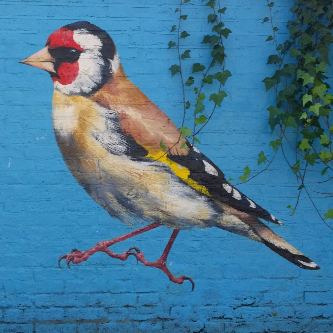 A Goldfinch by ATM in Acton. Goldfinch were number 6 in the 2020 big garden birdwatch