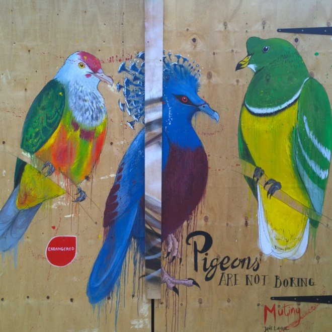Mutiny's exotic pigeons inside the boxpark