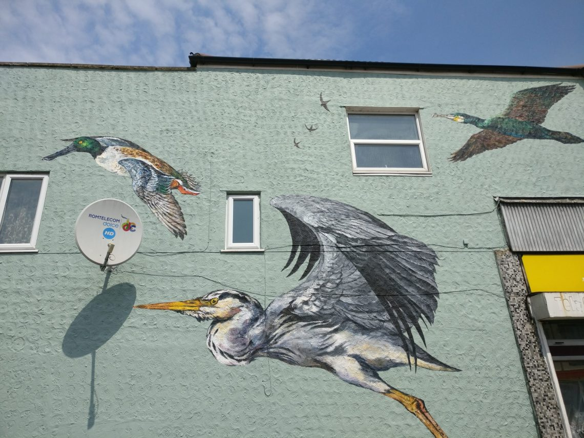 Paintings of a Shoveler duck, Heron, Swifts and a Cormorant on the mural on Coppermill Lane